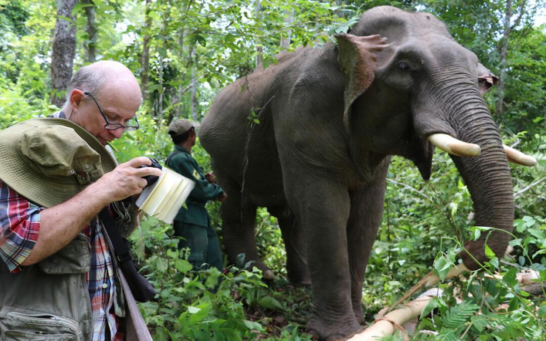 Du comportement alimentaire de l'éléphant d'Asie à la pharmacopée humaine